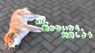 MT5が動かなくなったときの対処法、お教えします^^